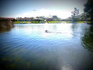 Ax swimming