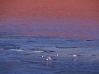 Bolivia's salt flats are beyond beautiful.
