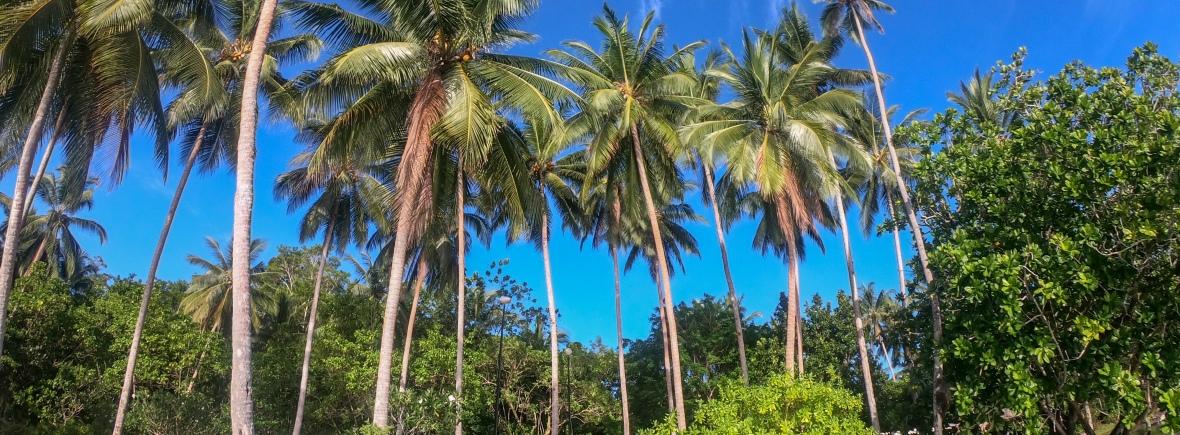 Discover Uepi Island Resort Solomon Islands with Spirit Quest Travel