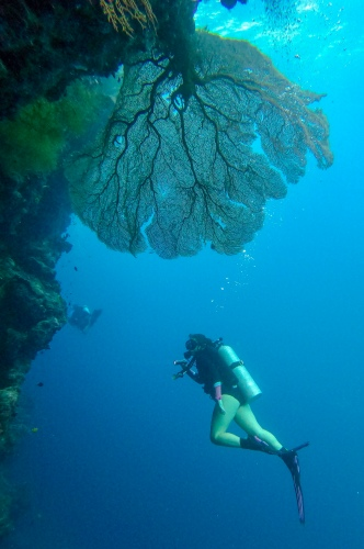 Diving Uepi Island, Solomon Islands | Visit Spirit Quest Travel to learn more.