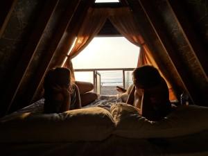 Beach huts at Alfresco Beach Hotel, Uppeveli Beach, Sri Lanka | Find out more at Spirit Quest Travel blog