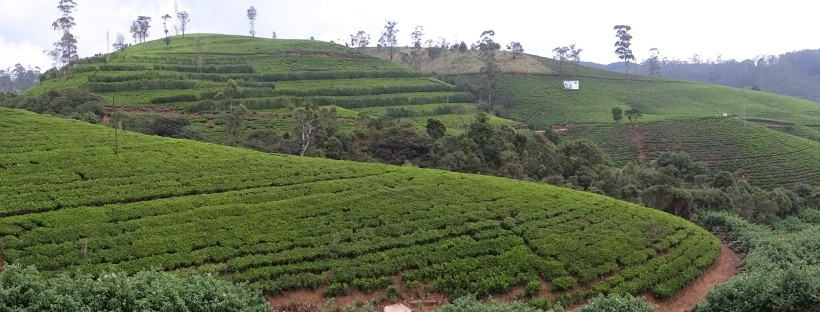 Explore Nuwara Eliya, Sri Lanka with Spirit Quest Travel | View our website for more info
