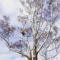 Inlet Tree Services in Action