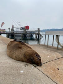 See the seals up close and personal in Narooma.